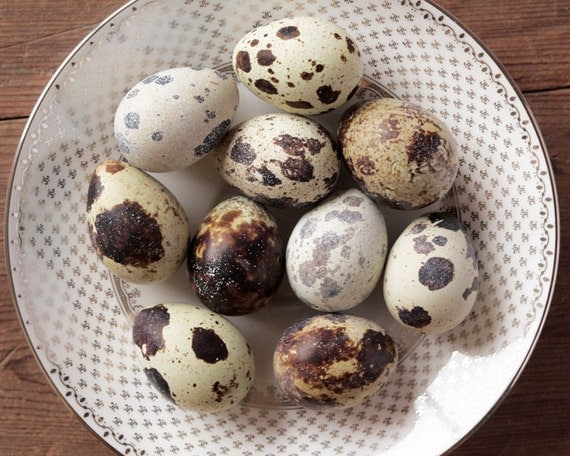 Quail Eggs - 10 Beautiful Speckled Eggshells
