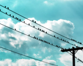 11x14 birds, wire, mint, teal, clouds, stormy, happy, kids room, shabby chic, bird lover, nature photography, animals, fine art photograph