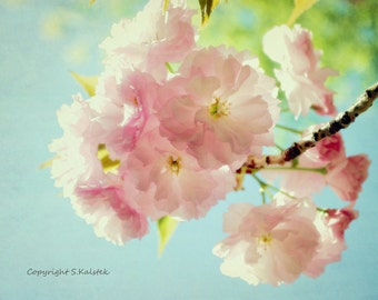 Cherry Blossom Photography Pink Photograph Flower Botanical Pink Aqua Wall Decor 8x10 Cherry Blossom Photograph