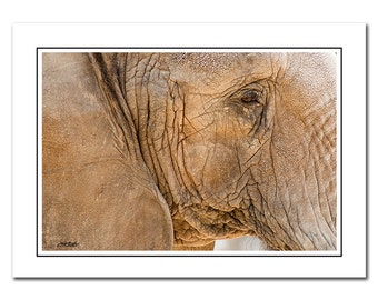 Elephant Note card with Envelope, Blank inside, Greeting Card, gray, brown, Thank You Card