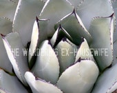 8x10/8x12 Photograph - 'Succulence II' - Ojai, California