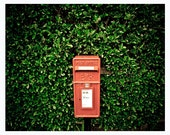 Royal mail post box photography print, 8x10 inch - Letters from over the hedge - red, green, shrubs, branches, green leaves