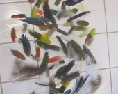 Distressed Feathers, Batch 4