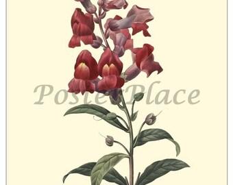 ART CARD - Snapdragon antique botanical print reproduction 1031