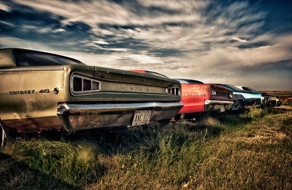 Fine Art Print Of Vintage Dodge Muscle Cars Rusting Away In A