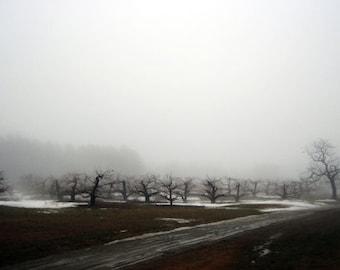 Londonderry Fog 3