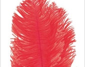"Feather Ostrich Feathers Plumes Drabs Red Macintosh 541 (4pcs) - loose dyed craft feather hair hat costume feathers fluffy 6"" lengths"