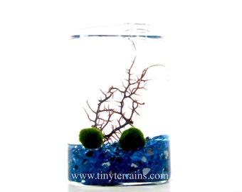 Marimo Terrarium: Moss Ball Rectangular Glass Cube Aquarium / Terrarium - Several colors available