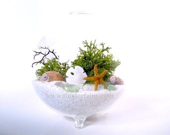 Lichen Terrarium: Modern Beach Globe Lichen Moss Terrarium, White, Natural, or Black Sand