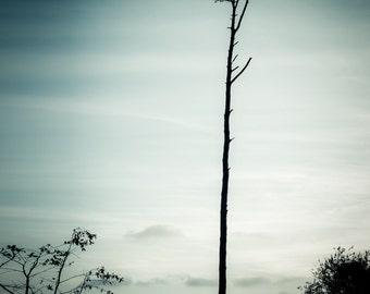 Fine Art Photography Print - blue, dark, mood, mysterious, tree, lonely, backlit, silhouette, landscape, nature - Standing My Ground