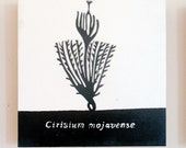 Cirsium mojavense, Mojave Thistle, Relief Print on Wood Panel, encaustic, botanical, hand pulled print, original art