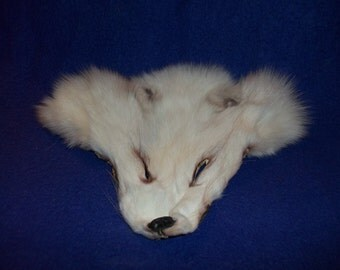 real animal fur Tanned white arctic fox face head taxidermy parts