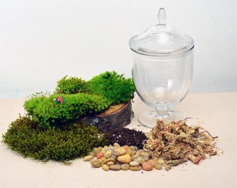DIY Terrarium kit  // Live Moss // Little People // Glass Apothecary Jar // Indoor Garden // Home Decor // Gift Ideas