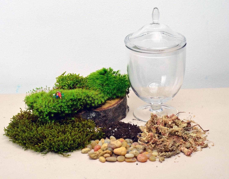 Diy terrarium kit live moss little people by for Indoor gardening glasses