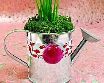 watering can party favor - wedding favor, etsy ny , terrarium, air plant, tillandsia,mini, succulent, moss terrarium, birthday party favors