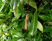 Witch's Finger amulet for Good Health - Witchcraft magic - Mistletoe and Rune protection
