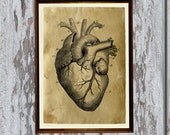 Heart Anatomy print on old paper Antiqued decoration AK61