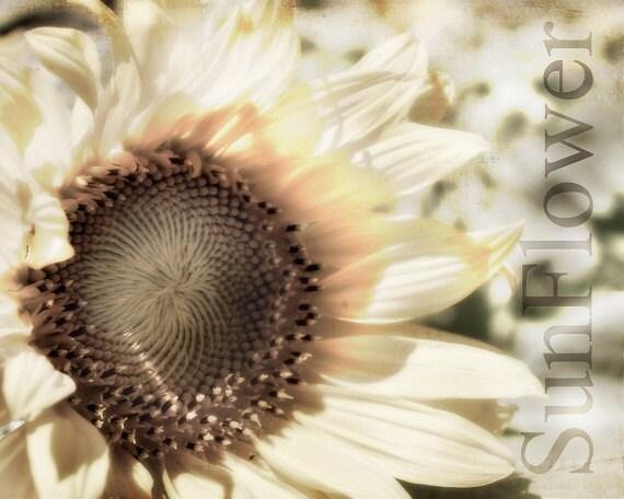 Sunflower Golden Sepia Farmhouse Decor Country Yellow Field Flowers Nature Farm Stands Sun Home Decor,  Fine Art Print