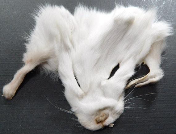 RESERVED Fur Scraps SHADOW Fox Fur Face Arctic Store Arktika Russia