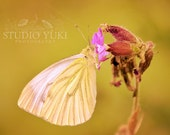 Butterfly Photo, Fine Art Photography, Butterfly print, Home Decor, Summer, Gold, 12x12, Nature - Shine