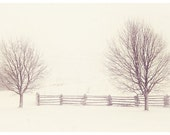 Dreamy winter photograph, sepia winter, 8x12 print, tree winter art print, rustic modern print, mocha white, landscape photograph,