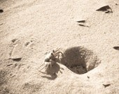 crab photography, wildlife photography, ghost crab, sand dunes, warm tones, outer banks