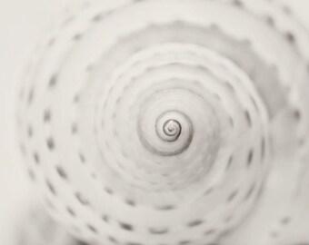 Shell Photography - Beach Photograph - Sea Life Photo - Minimalist Photo - Black & White Print - Neutral Beach Decor