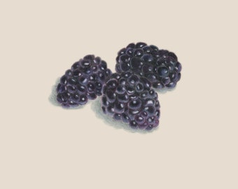 Blackberries Drawing print