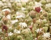 "Queen Anne's Lace Flower Print 9"" X 12"" Fine Art Photography, Wildflower, Autumn Queens, Field of Flowers"