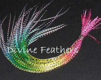 "3 BLENDED Feather Extensions 9""-12"" Long Grizzly Feather hair Extensions Whiting Grizzly saddle"