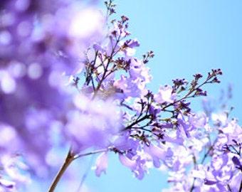Lavender and Aqua Flower Photo Print - Size 8x10, 5x7, or 4x6