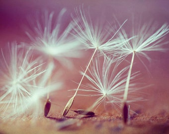 "Dandelion Seeds Close-up Soft Light Fine Detail Home Decor Fine Art ""Beautiful Seeds"""