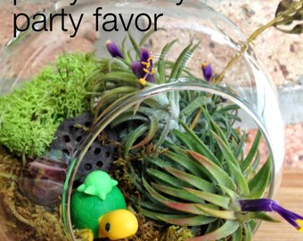 Turtle and Air Plant Moss Terrarium - A Wonderful Birthday Gift Idea
