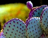 Opuntia Santa Rita Cactus, 10 seeds, purple pads, yellow flowers, magenta fruit, Opuntia violacea, drought tolerant, ornamental cactus