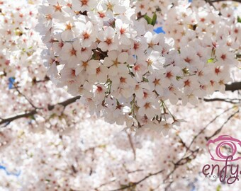 Nature Photography -Fine Art Print - Botanical Cherry Blossom Forest Soft Dream Romantic Pastel Nursery Wall Art