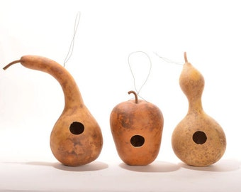 Birdhouse gourds, drilled for birdhouses, natural gourds, bottle gourd, apple gourd, dipper gourd