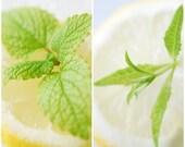 1/2oz Natural Lemon Verbena Perfume Oil, Lemon Verbena Fragrance Oil, Lemon Verbena Scent, Lotions and Potions