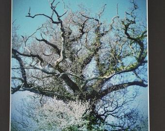 "Mounted Original Photograph - 20x18"" - Tree Beauty"