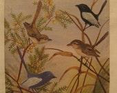 Original Naive Bird Painting with Blue Bird and Black Bird.