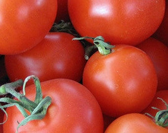 Heirloom, Farm Grown, Homestead Tomato, Gardeners Favorite, 25 Seeds