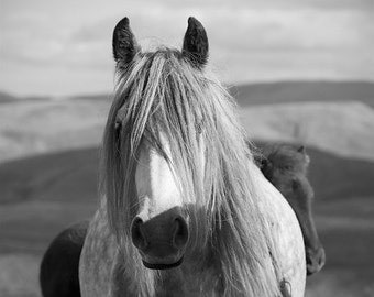 Equestrian decor, horse photography, black and white, fine art print, large horse art, choice of sizes