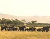 Slow and Steady // Nature Wildlife Landscape Photography // Elephants Kenya // safari // Art Home