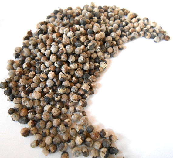 Vitex Berries, Organic - Chaste Tree Berry - Many Traditional Uses from Antiquity