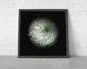 Floral Art, Flowers Photography, Minimalist Art, Botanical Print, White Flower, Wall Art / White Chrysanthemum