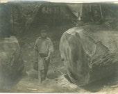 Boy Between Giant Log, Gypsy Camp Along the River, Charles H. Shader Vintage Photograph, Green River, Kentucky