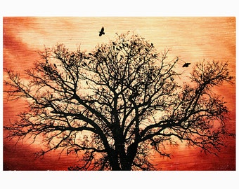 Photo Transferred onto Wood- 10x15 'Flight of the Unrivaled' (free shipping)