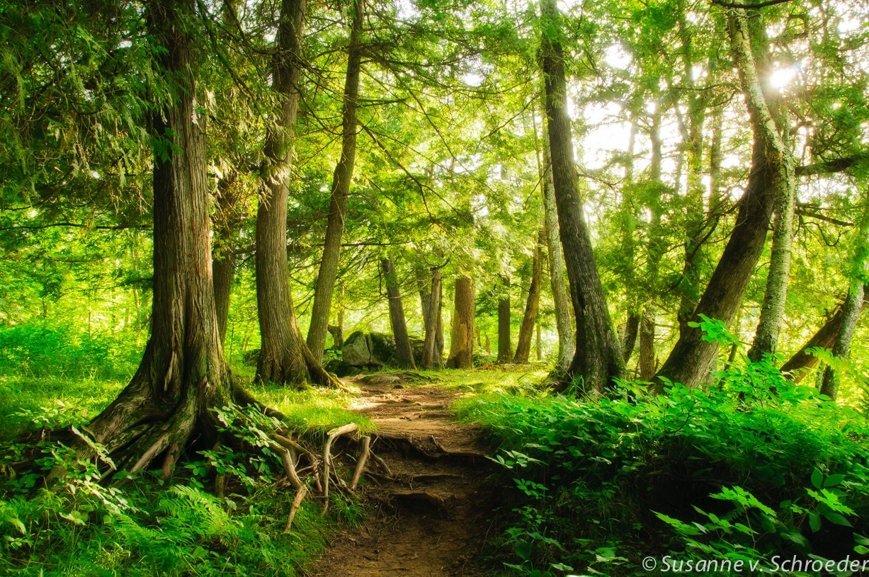 Enchanted Forest Nature Photography Fine Art Print Magical