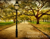 Charleston SC A Walk in the Park Fine Art Print 8x10 11x14 16x20 Photo Southern Art Landscape Battery Park South Carolina Spring Wall Decor