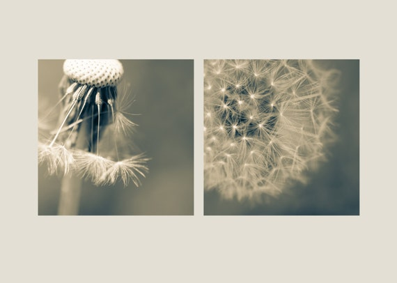 Dandelion Diptych. Flower. Nature Photography. Macro. Two Botanical Prints by OneFrameStories.