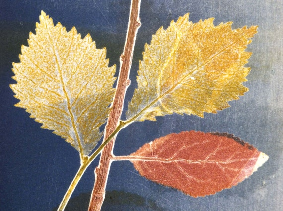Leaves Monoprint, Natural, Blue, Orange, Yellow, Ivy